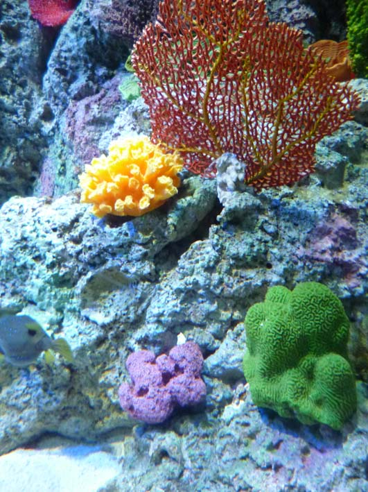 SEA Aquarium coral.jpg